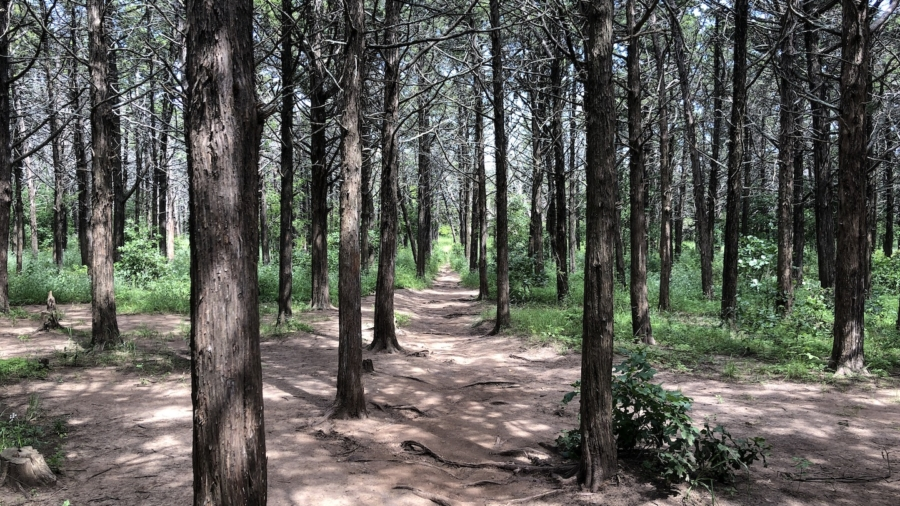 2019-06-13 Parallel Forest-01